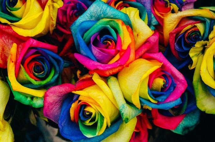 roses-828945_960_720.jpg