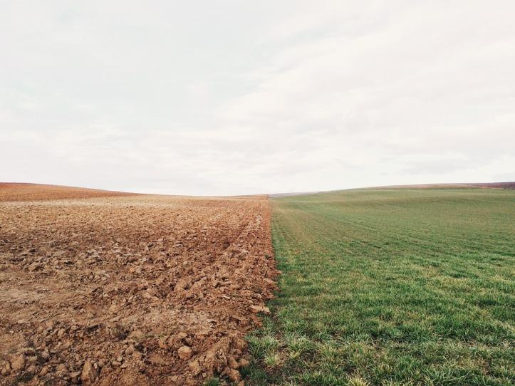 farmland-801817_960_720.jpg